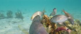 Mes photos sous l'eau ?